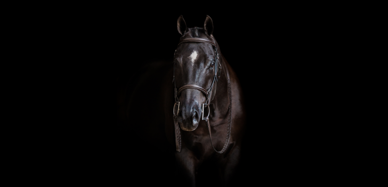 Southern Pines Equine Photographer