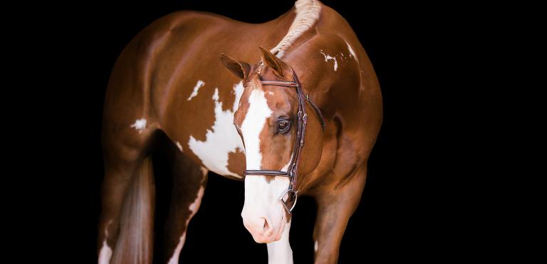 South Carolina Equine Photographer