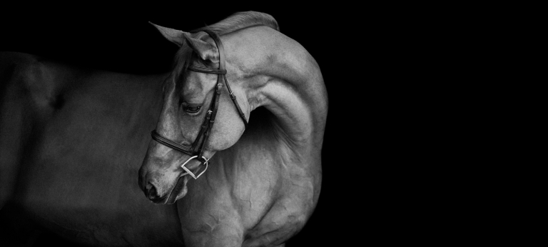 Southern Pines Horse Photography